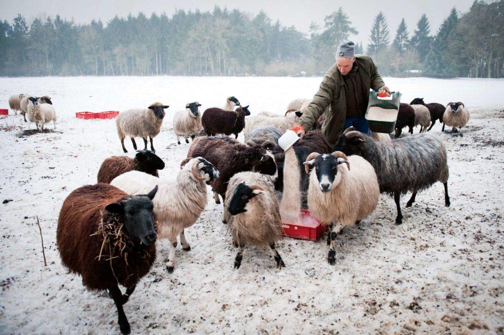 Der Schäfer, der Schlachter, der Koch und das Lamm – Teil I