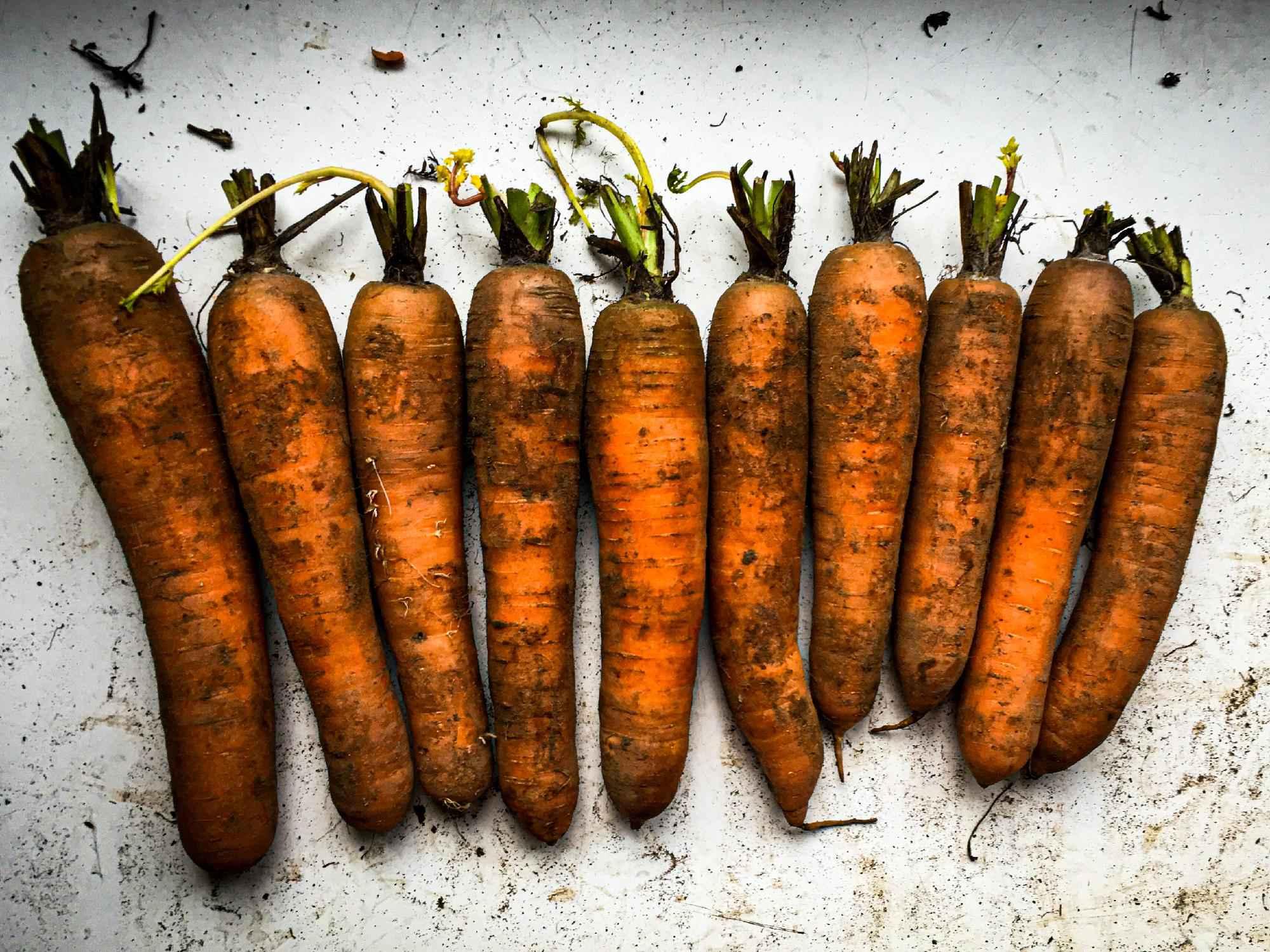 Karottenwerdung