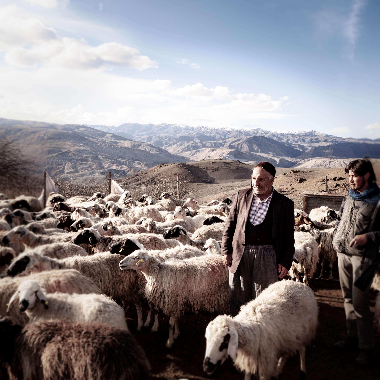 Einige schwarze Schafe sind erlaubt. Es wäre gegen die Realität, wenn Tulum Erzincan nur aus Milch von weißen gemacht sein dürfte