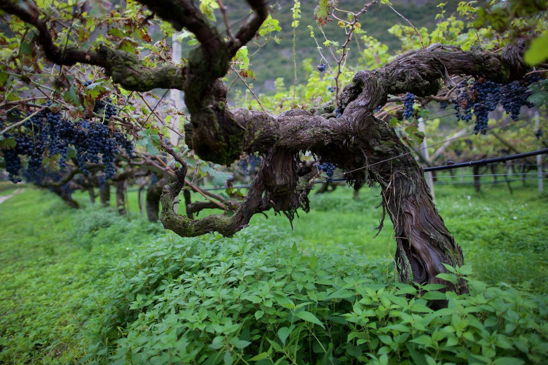 Südtirol – Die Pioniere