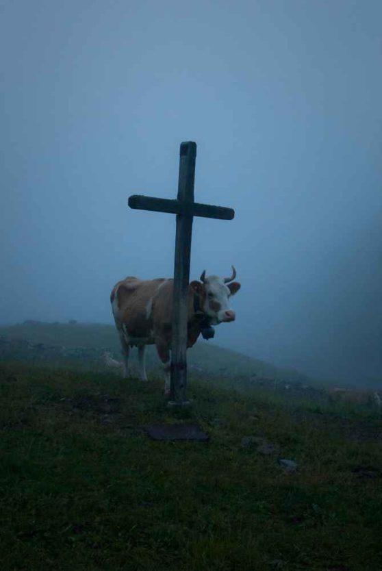 Der doppelte Sascha und die halbe Kuh