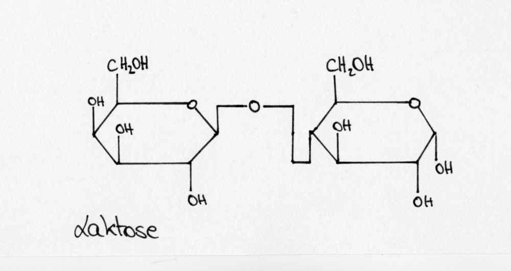 Laktose
