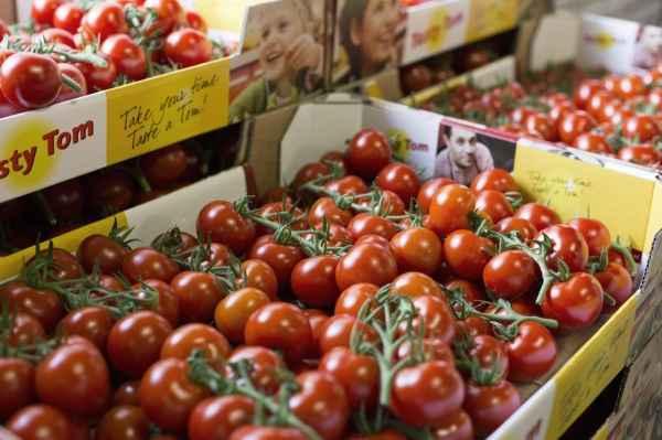 Die Tasty Tom war die erste Strauchtomate in den Supermärkten